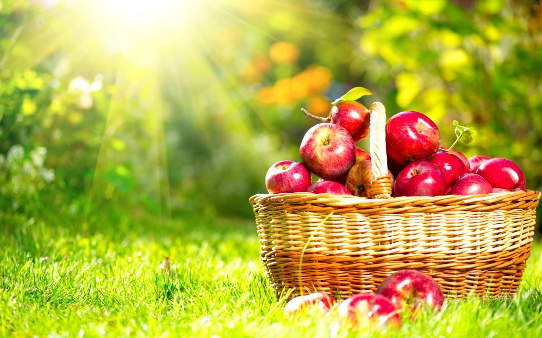 Pieci padomi, kā jaunajā skolas gadā iekļaut bērnu ēdienkartē bioloģisko pārtiku!