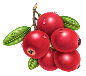 cranberries-darker