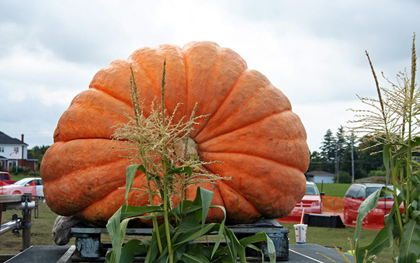 cover_biggest_pumpkins-dd